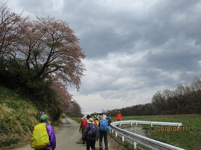 画像14: 【山旅会】オオムラサキ自然歩道