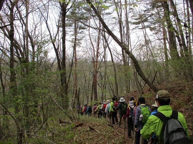 画像2: 【山旅会】オオムラサキ自然歩道