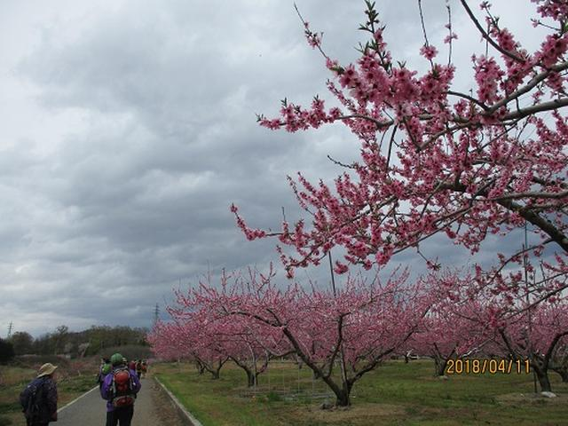 画像9: 【山旅会】新府桃源郷