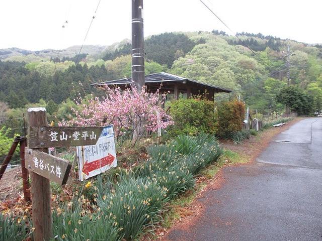 画像1: 【山旅会】笠山から堂平山