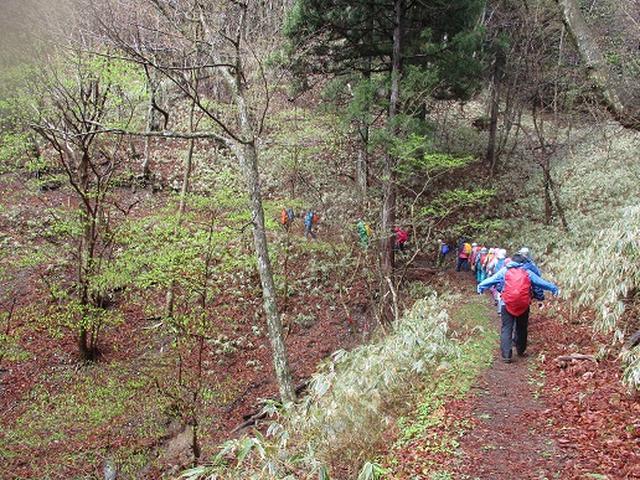 画像10: 【山旅会】2回目の八溝山は雨でした。。。