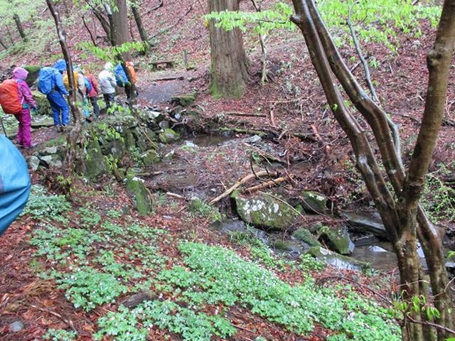 画像3: 【山旅会】2回目の八溝山は雨でした。。。
