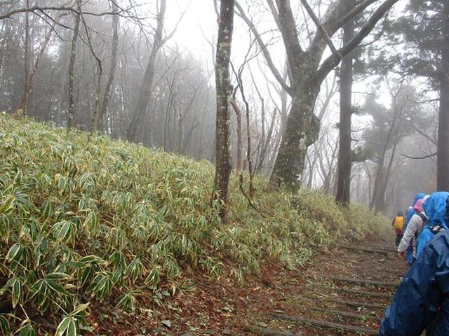 画像9: 【山旅会】2回目の八溝山は雨でした。。。