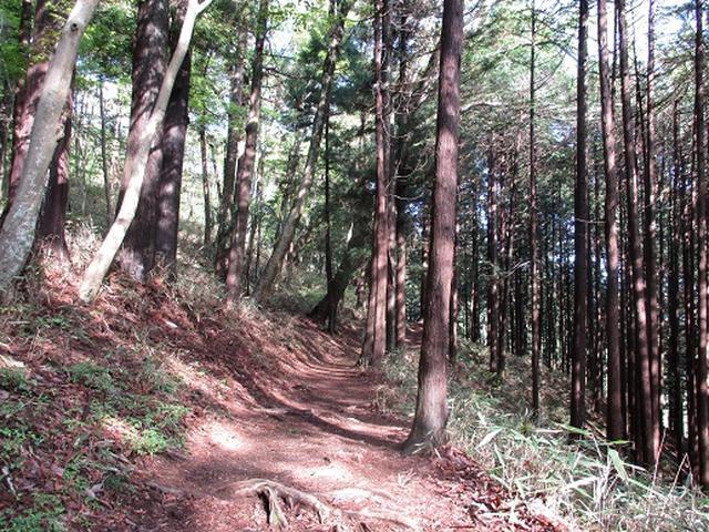 画像4: 【山旅会】高水三山下見報告です!