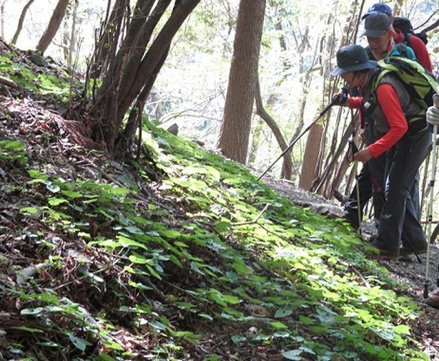 画像7: 【山旅会】笠山から堂平山