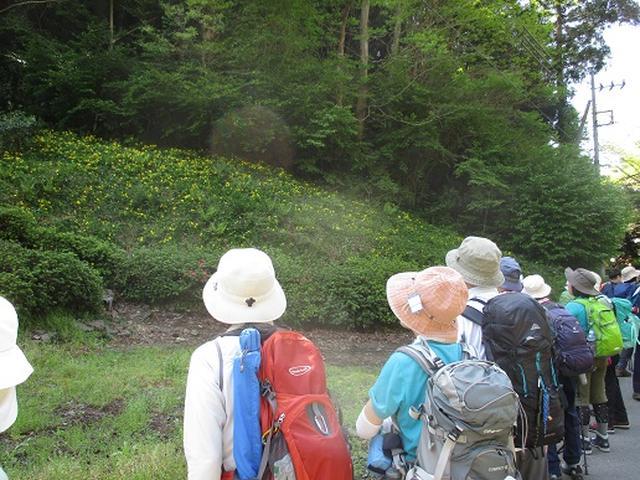 画像2: 【山旅会】西山峠から草戸山