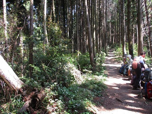 画像6: 【山旅会】西山峠から草戸山