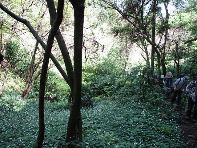 画像5: 【山旅会】西山峠から草戸山