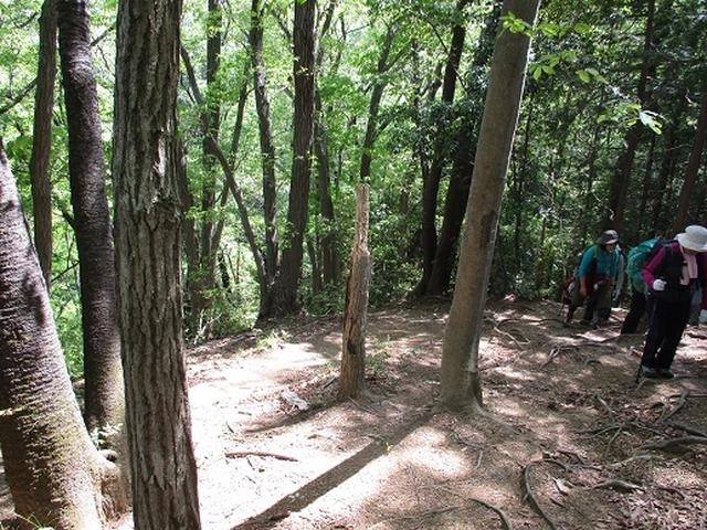 画像9: 【山旅会】西山峠から草戸山