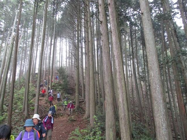 画像8: 【山旅会】高水三山