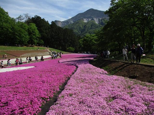 画像4: 【山旅会】琴平丘陵