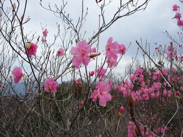 画像8: 【山旅会】両神山