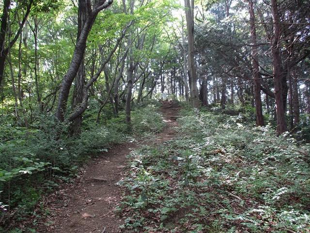 画像4: 【山旅会】狐塚峠から八王子城跡