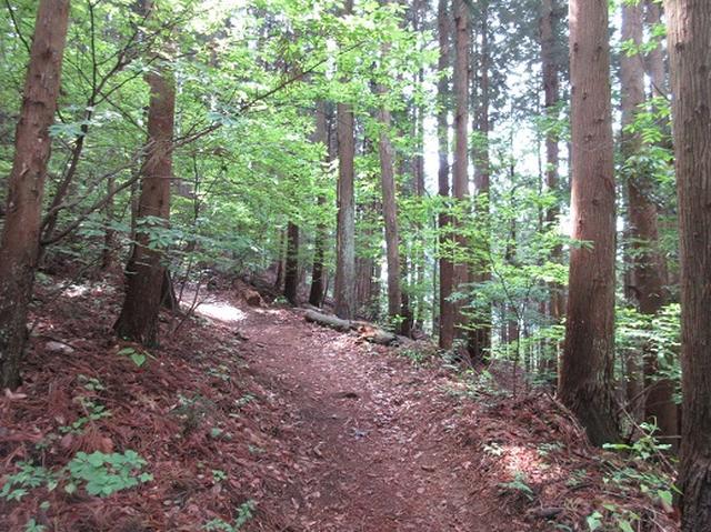 画像3: 【山旅会】秩父丸山