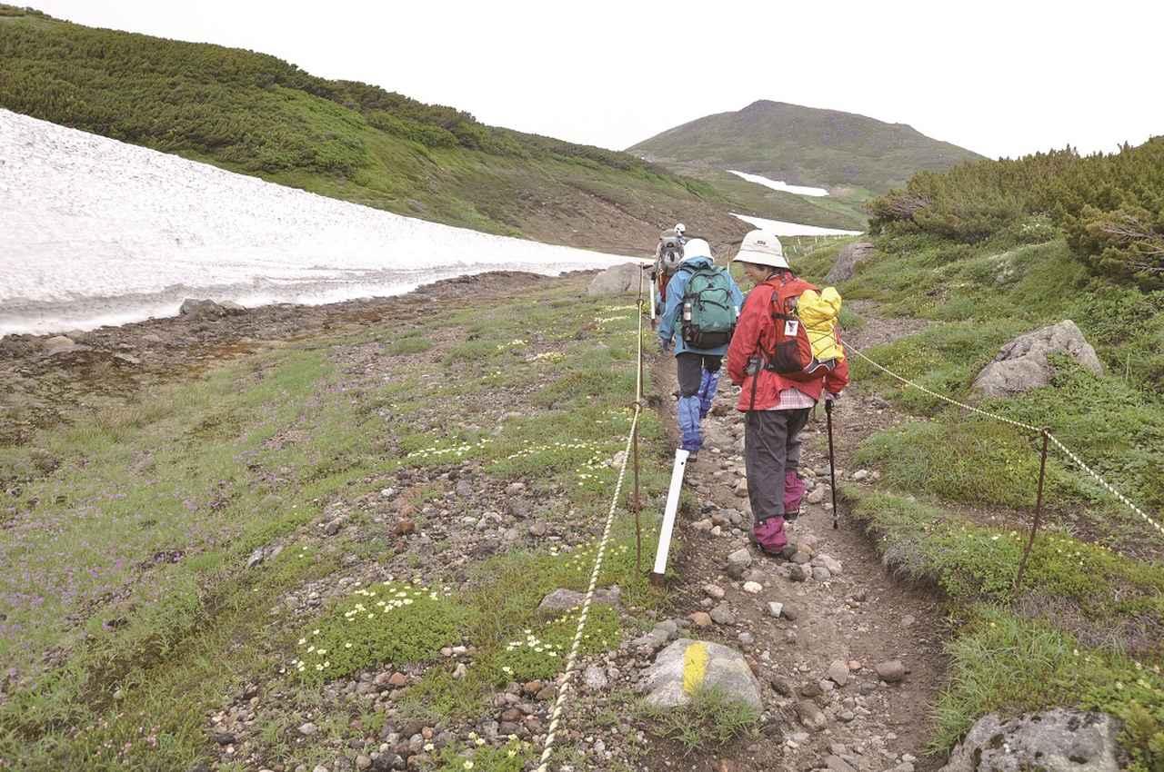 画像: たくさんの花が咲く大雪山の登山道