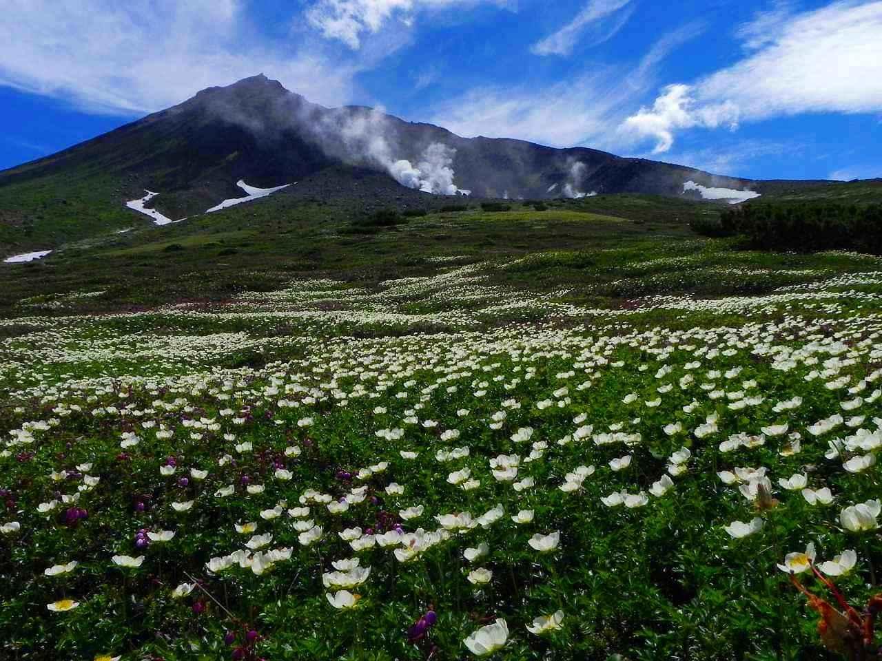画像: 北海道大雪山ツアー・旅行|クラブツーリズム