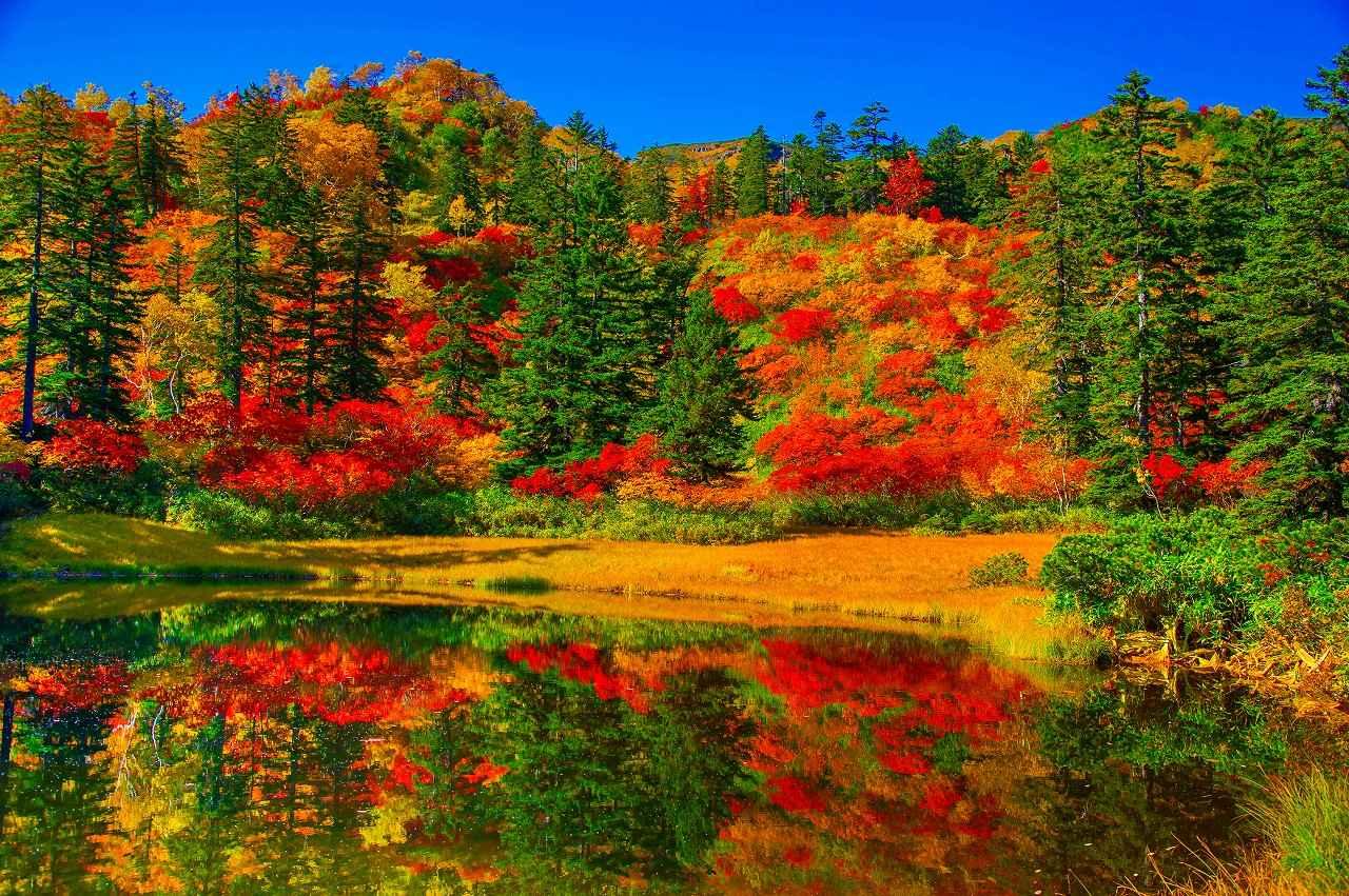 画像: 大雪山の紅葉は例年9月中旬から下旬に見ごろを迎えるため、「日本で一番早い紅葉」といわれています。 山肌を真っ赤に染める銀泉台の紅葉や、大雪高原沼をはじめとした水鏡の紅葉、真っ赤なカエデや朱色のナナカマドの色づきと緑の針葉樹の美しいコントラストが見られます。