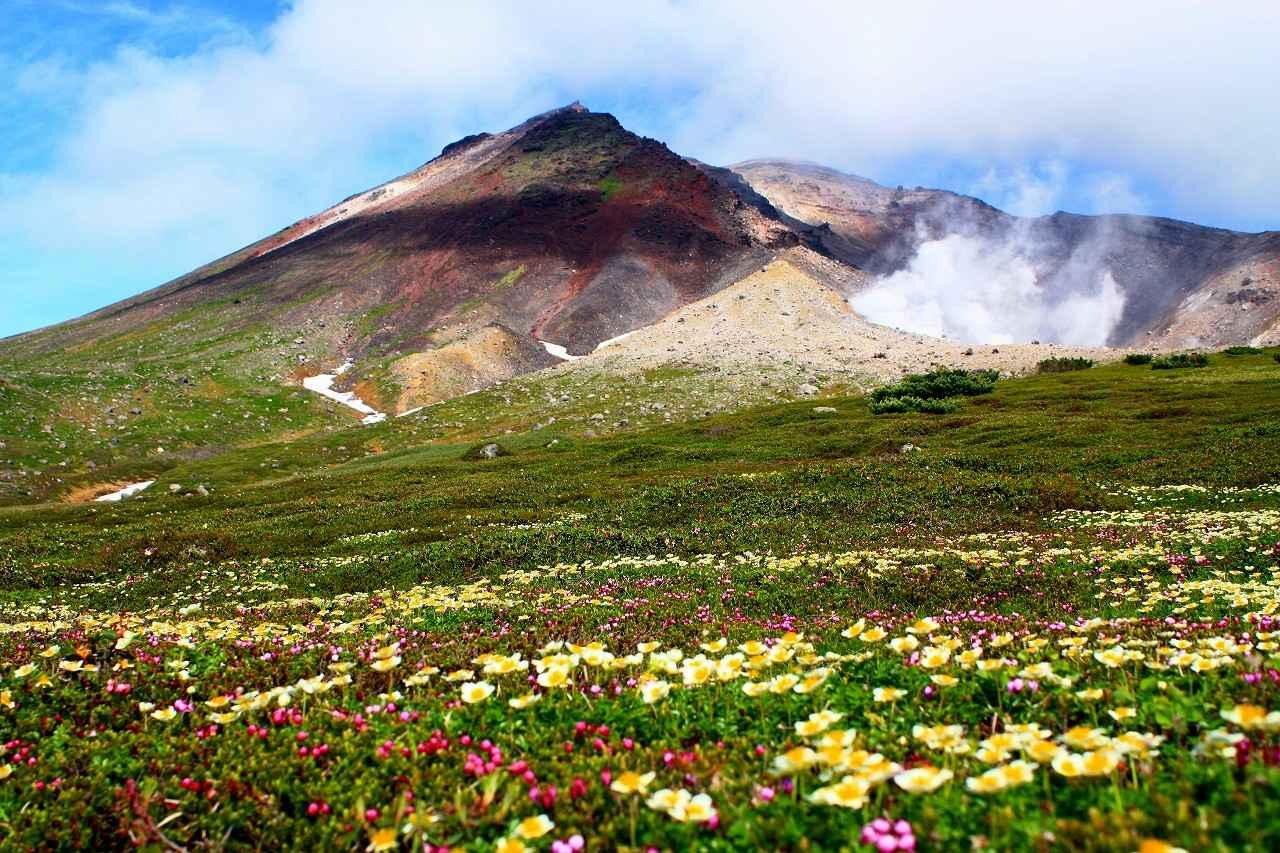 画像: 日本最大級の高山地帯を形成する大雪山。 火山活動により隆起した山々がなだらかに広がる自然豊かな山域です。 日本アルプスより低い標高約1700m付近から高山植物の宝庫となっており、登山道からチングルマをはじめとしたカラフルな花の競演を見ることができます。