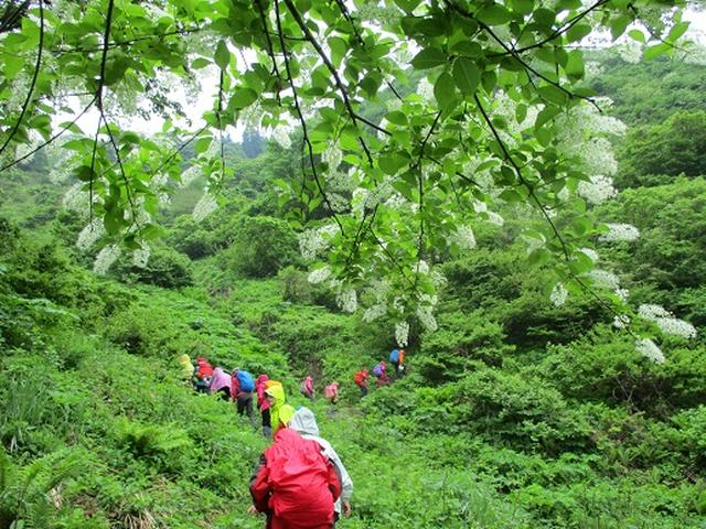 画像4: 【山旅会】坂戸山