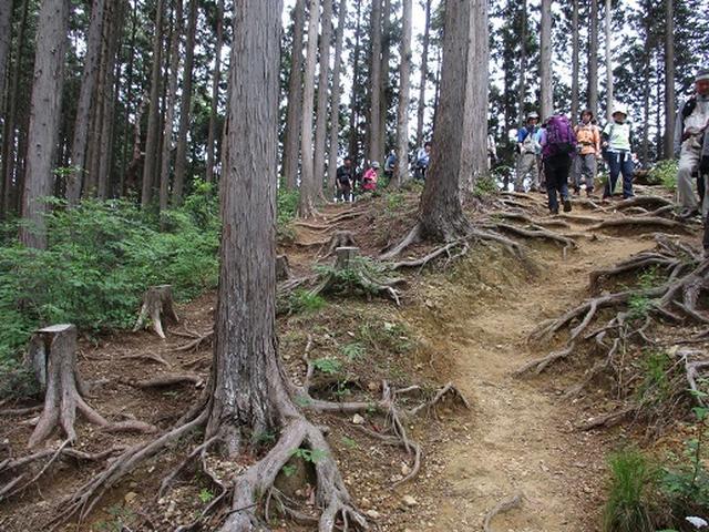 画像6: 【山旅会】青梅丘陵