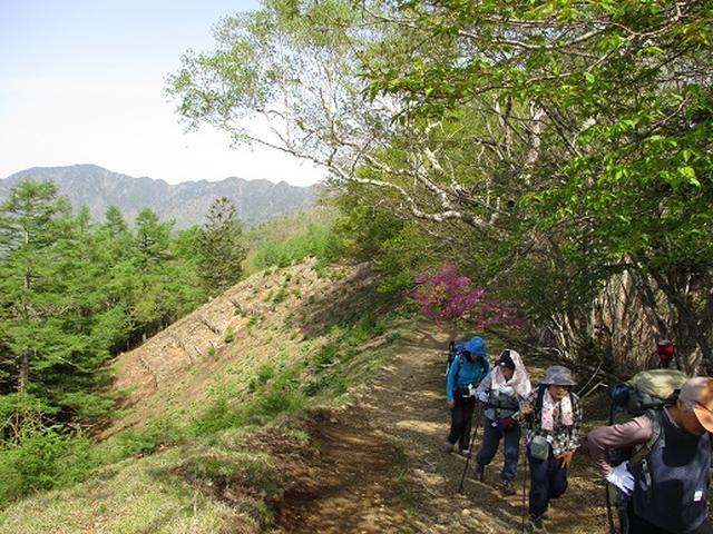 画像8: 【山旅会】雲取山から鴨沢
