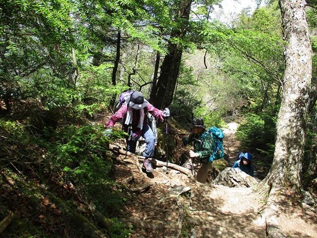 画像8: 【山旅会】三峰から雲取山