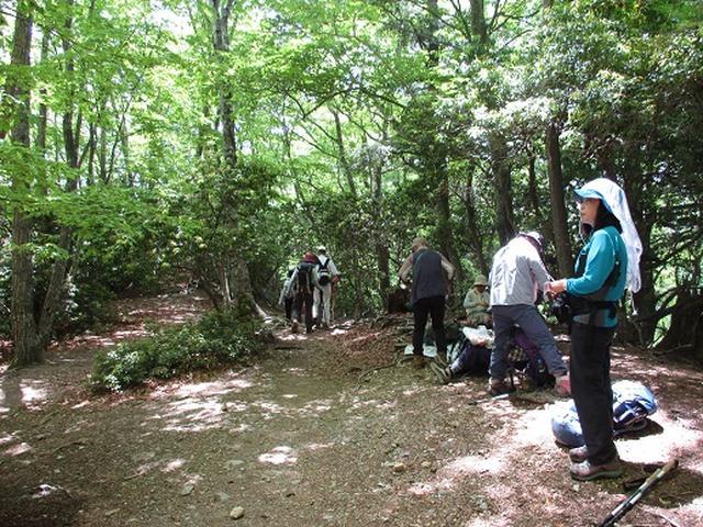 画像10: 【山旅会】雲取山から鴨沢