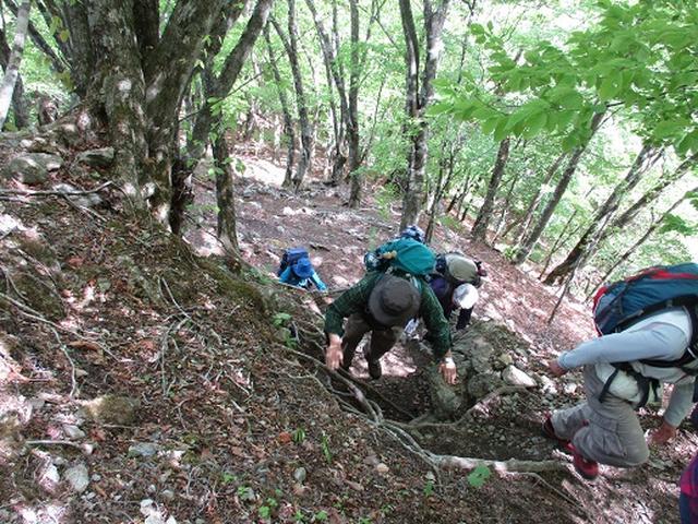 画像5: 【山旅会】三峰から雲取山