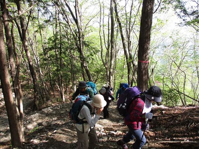 画像2: 【山旅会】三峰から雲取山