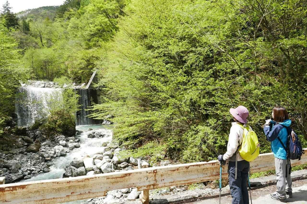 画像2: 次回おすすめのハイキングイベントは…こちら! チャンスは五年に1度! 初夏の駒ケ岳山麓「秘境しらび林道ウォーキング」日帰りツアーです。