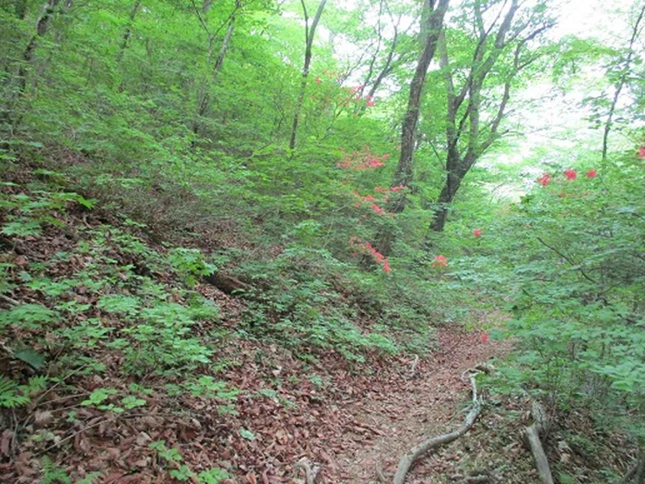 画像6: 【山旅会】榛名・二ツ岳