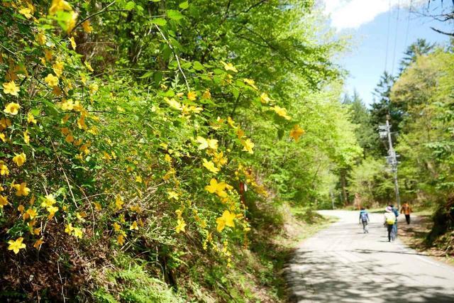 画像4: 次回おすすめのハイキングイベントは…こちら! チャンスは五年に1度! 初夏の駒ケ岳山麓「秘境しらび林道ウォーキング」日帰りツアーです。