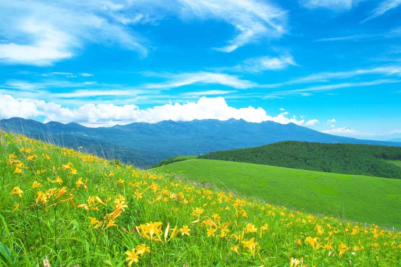 画像: 他、「雲上の散歩道 夏の爽やか車山・霧ヶ峰ハイキング」もございます
