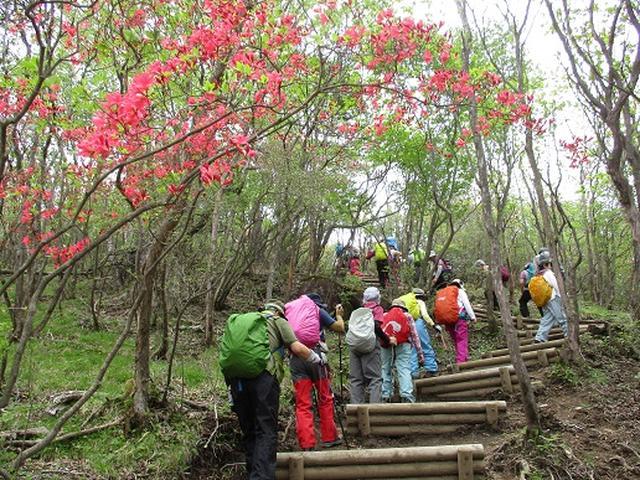 画像3: 【山旅会】横根山と井戸湿原