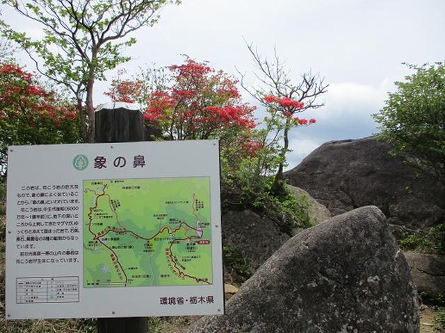 画像11: 【山旅会】横根山と井戸湿原