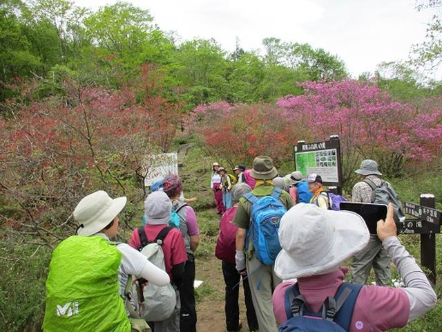 画像9: 【山旅会】横根山と井戸湿原