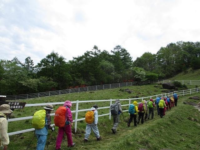 画像1: 【山旅会】横根山と井戸湿原