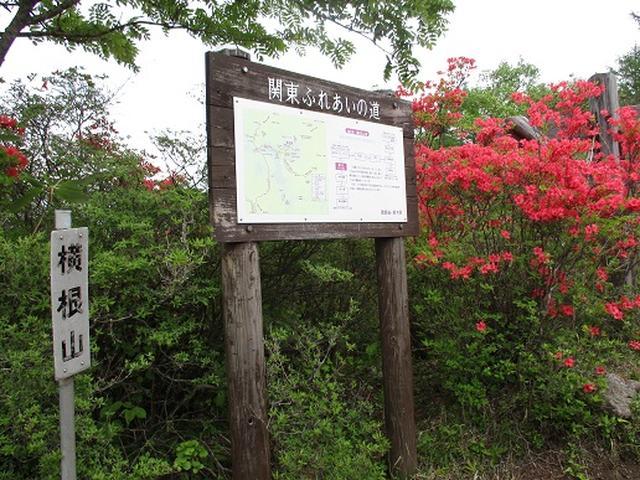 画像4: 【山旅会】横根山と井戸湿原