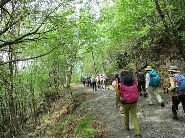 画像13: 【山旅会】横根山と井戸湿原