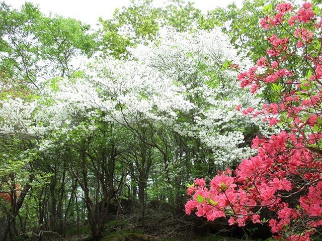 画像7: 【山旅会】横根山と井戸湿原