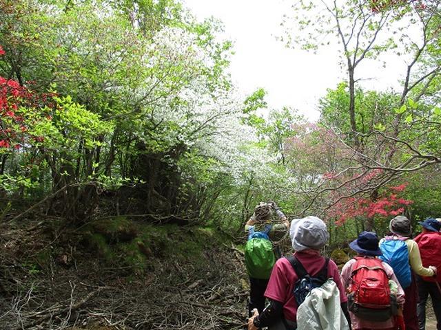 画像6: 【山旅会】横根山と井戸湿原