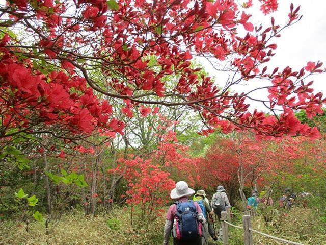 画像10: 【山旅会】横根山と井戸湿原