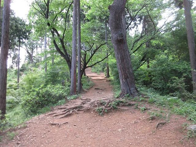 画像8: 【山旅会】金毘羅尾根から日の出山