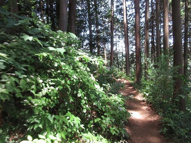 画像3: 【山旅会】金毘羅尾根から日の出山
