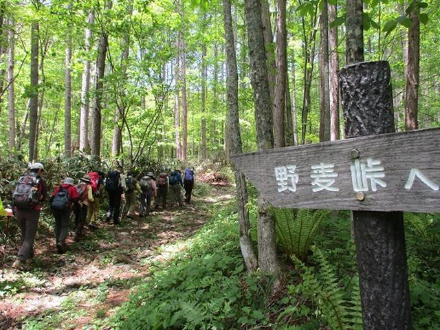 画像2: 【山旅会】野麦峠ハイキング