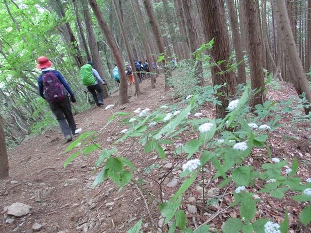 画像11: 【山旅会】相模湖から陣馬山