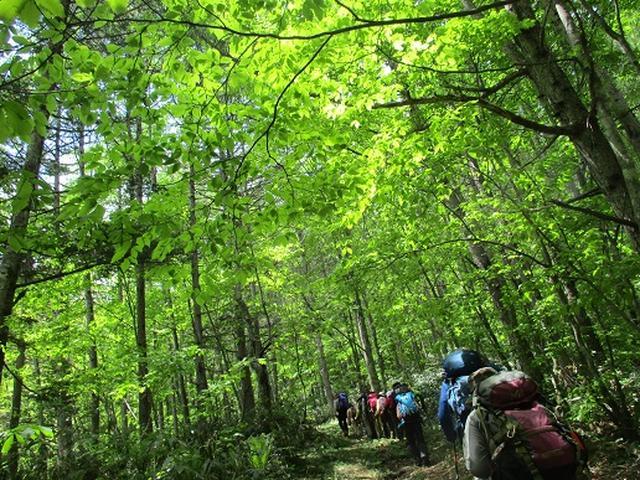 画像4: 【山旅会】野麦峠ハイキング