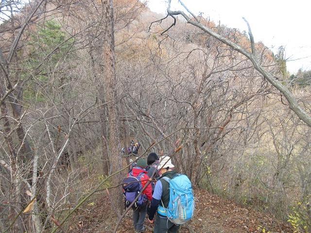 画像4: 【山旅会】大霧山ツアーのご案内