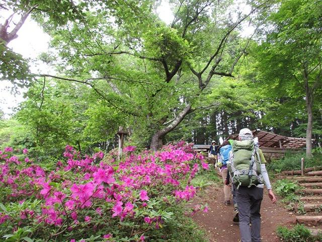 画像9: 【山旅会】相模湖から陣馬山