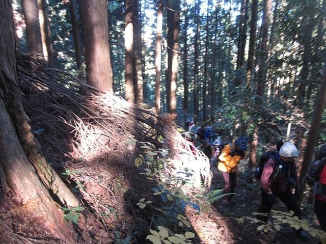 画像1: 【山旅会】大霧山ツアーのご案内